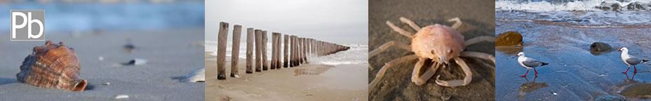 Limite di marea